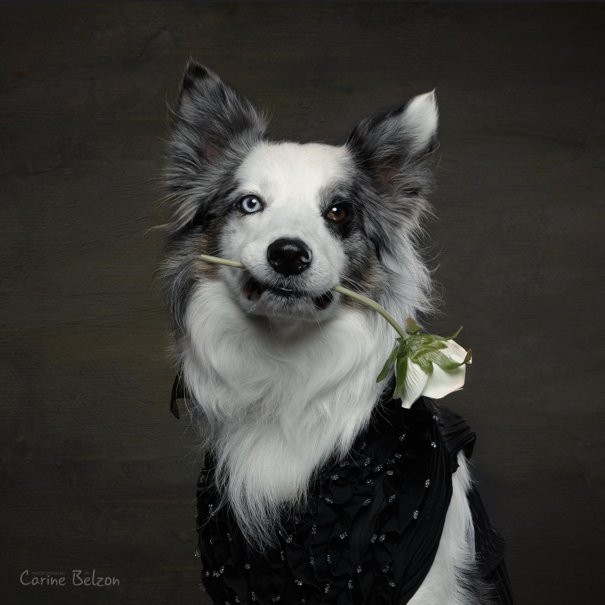 Hond (en baas) minisessies - Carine Belzon | Fotograaf Drachten