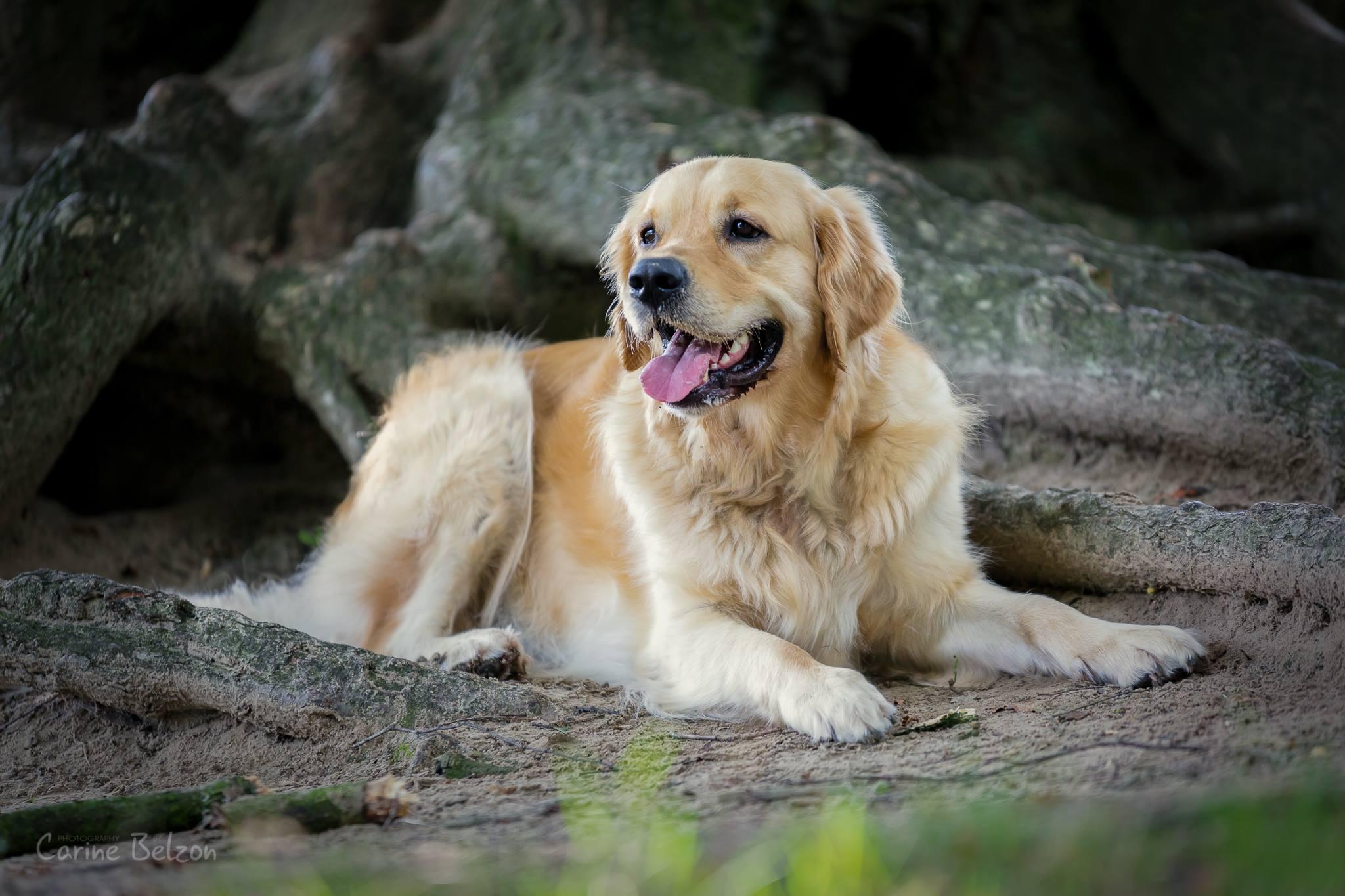 Honden shoot op locatie - Carine Belzon Fotografie